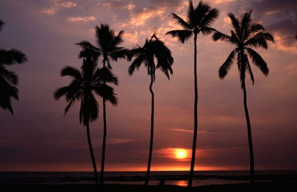 Hawai (216a)